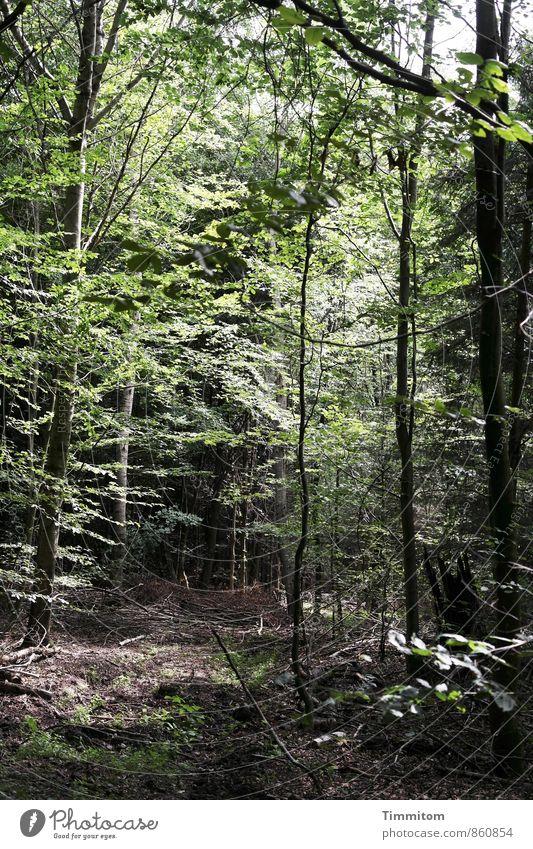 Ein Bild von einem Wald. Umwelt Natur Pflanze Sonnenlicht Sommer Wetter Schönes Wetter Baum Laubwald Holz gehen Blick dunkel natürlich grün schwarz Gefühle