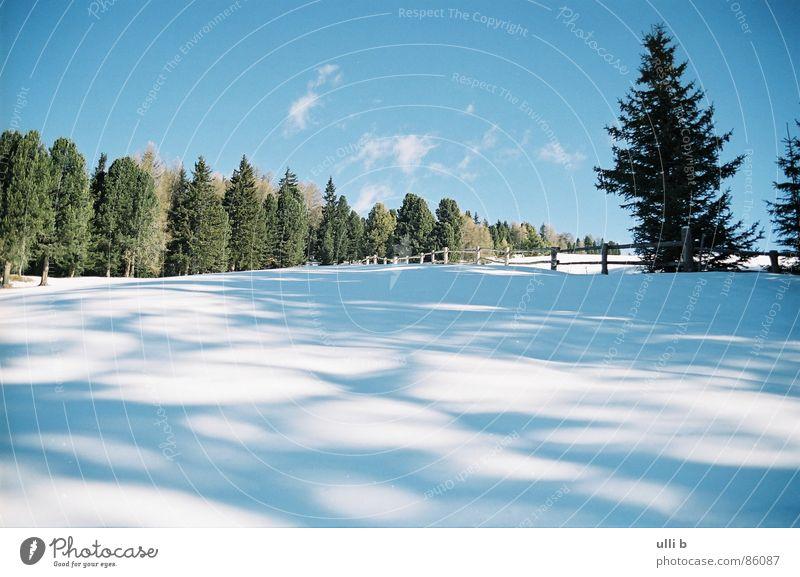 waldschatten Tanne Waldlichtung wandern Italien Ferien & Urlaub & Reisen Winter Schatten Schnee Sonne Berge u. Gebirge
