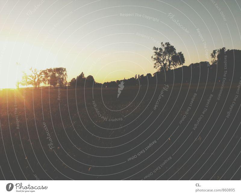 rumhängen mit sinn Umwelt Natur Landschaft Himmel Wolkenloser Himmel Sonne Sonnenaufgang Sonnenuntergang Sonnenlicht Sommer Klima Wetter Schönes Wetter Gras