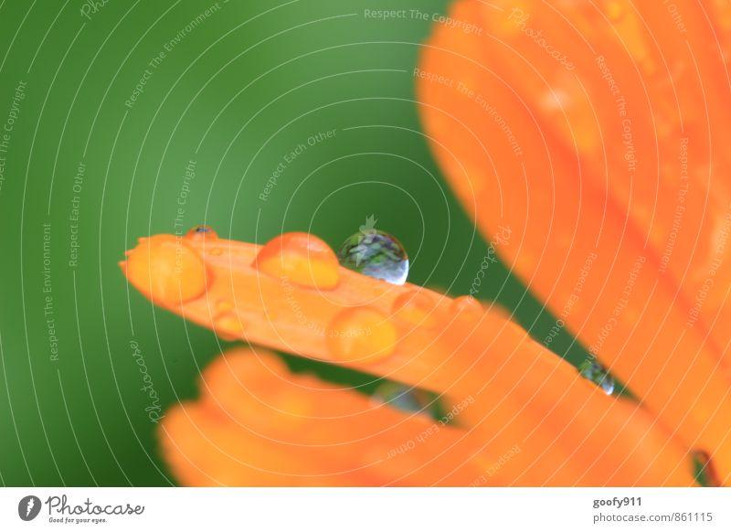 Wassertropfen Natur Pflanze Sommer schlechtes Wetter Regen Blatt Blüte Garten Park Tropfen nass natürlich grün orange Farbfoto Außenaufnahme Tag Unschärfe