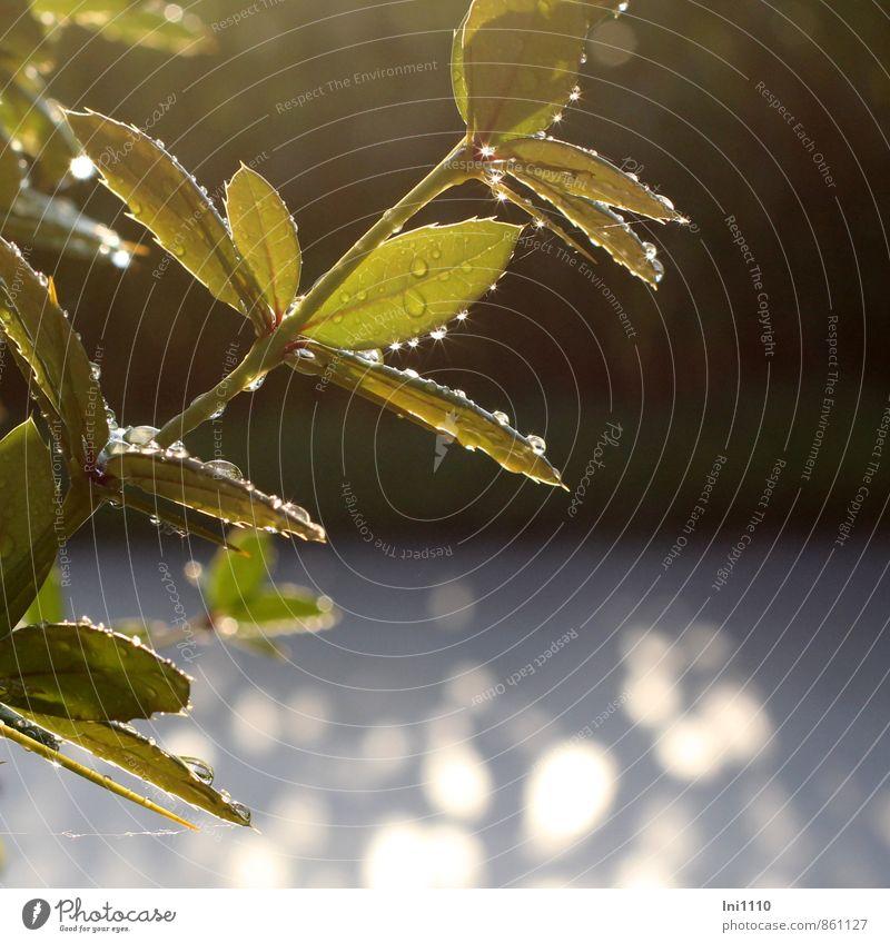 auf Regen folgt Sonnenschein Natur blau Pflanze schön grün weiß Sommer rot schwarz Umwelt gelb grau außergewöhnlich Garten Park Wetter