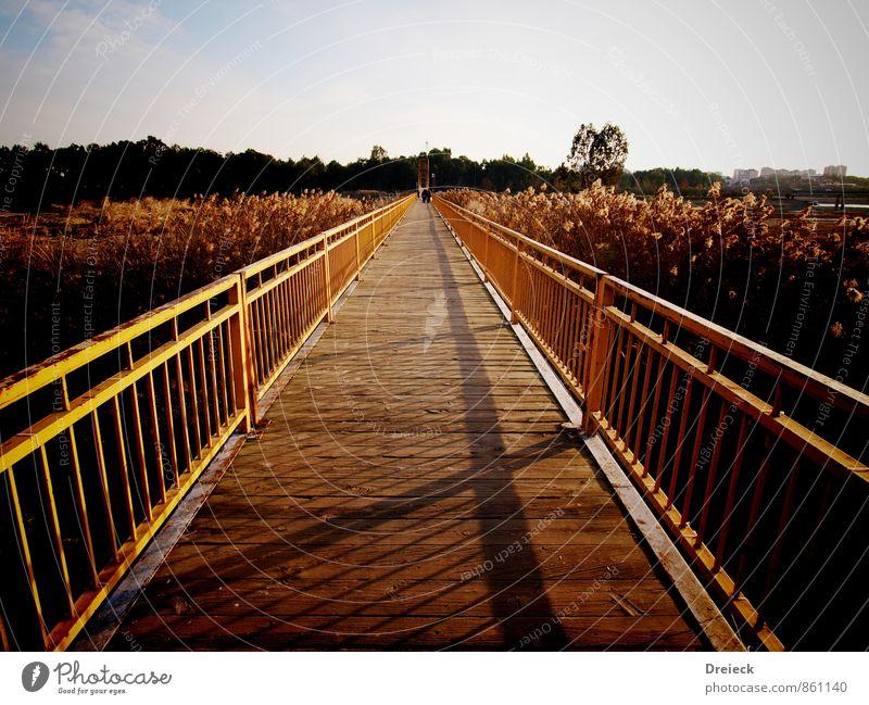 Fokus Sonne Sonnenaufgang Sonnenuntergang Sonnenlicht Sommer Schönes Wetter Pflanze Blüte Park Brücke Bauwerk Holz Metall Stahl Rost Blick Ferne hell braun gelb