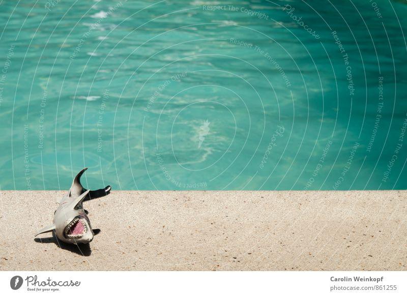 Hai. Lifestyle Reichtum Wellness Wohlgefühl Erholung Spa Schwimmen & Baden Ferien & Urlaub & Reisen Tourismus Abenteuer Sommer Sommerurlaub Sonnenbad Wellen