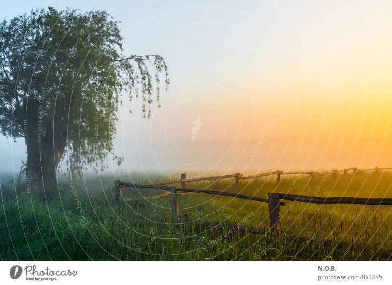Morgenstimmung Himmel schön grün Sommer Baum Landschaft ruhig gelb Leben Wiese Gras Stimmung orange Feld frisch ästhetisch