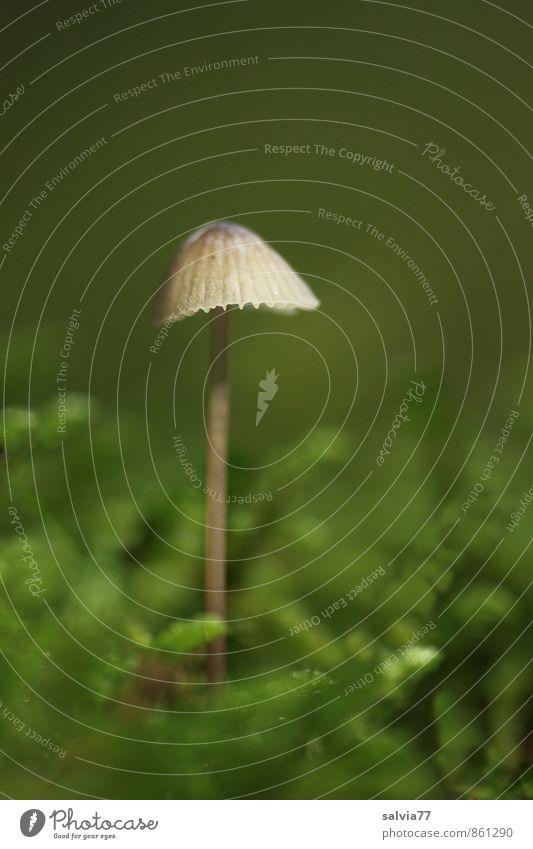 Solo Natur Pflanze Erde Herbst Moos Grünpflanze Pilz Wald leuchten stehen Wachstum ästhetisch dünn einfach klein nackt natürlich weich braun grün ruhig