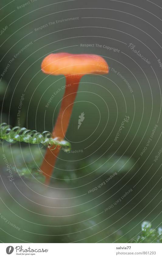 Eingemoost Natur Pflanze Erde Herbst Moos Grünpflanze Pilz Wald berühren stehen Traurigkeit Wachstum dünn einfach klein nah natürlich braun grün ruhig