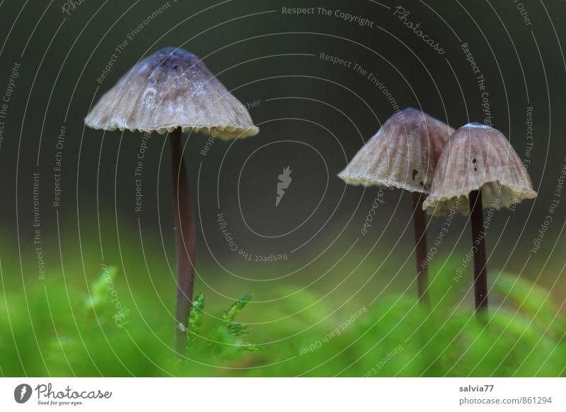 Zwei im Abseits Natur Pflanze Erde Herbst Moos Wildpflanze Wald stehen Wachstum dünn frisch Zusammensein klein nackt natürlich weich grau grün schwarz ruhig