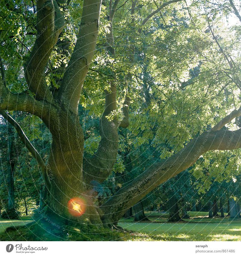Baumseele Natur Pflanze grün Blatt Wald Umwelt Leben Idylle Ast Jahreszeiten Baumstamm Zweig Baumkrone Baumrinde verträumt