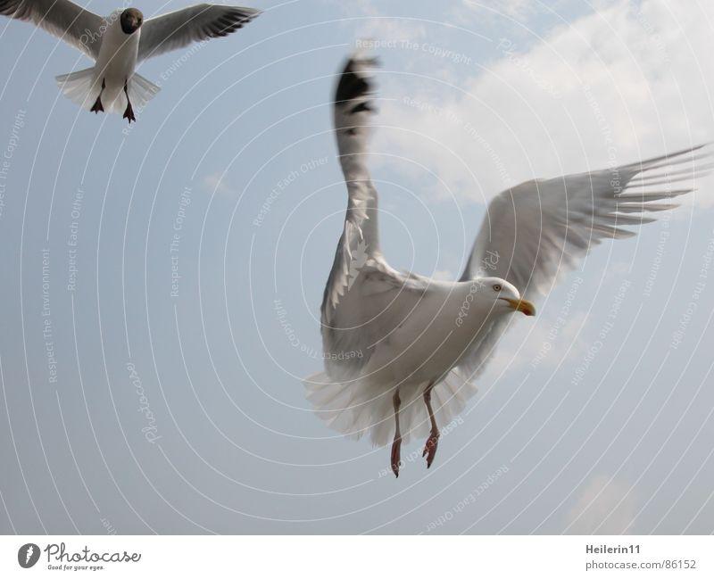 Im Anflug Fähre Erholung Sommer Anlegestelle flattern Ferien & Urlaub & Reisen Appetit & Hunger Vogel möven fliegen warme jahreszeit relaxans