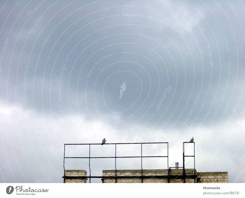 Tauben Wolken dunkel Einsamkeit