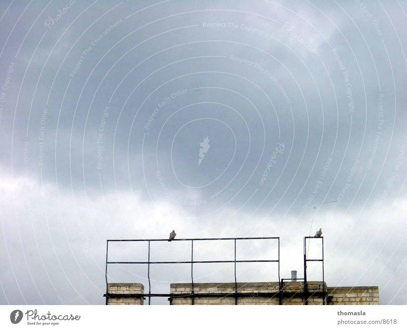 Tauben Wolken Einsamkeit dunkel
