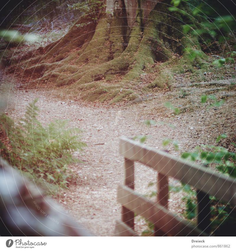 Holzweg Umwelt Natur Frühling Sommer Pflanze Baum Sträucher Blatt Blüte Grünpflanze Wildpflanze Park Wald frisch Gesundheit natürlich braun grün Farbfoto