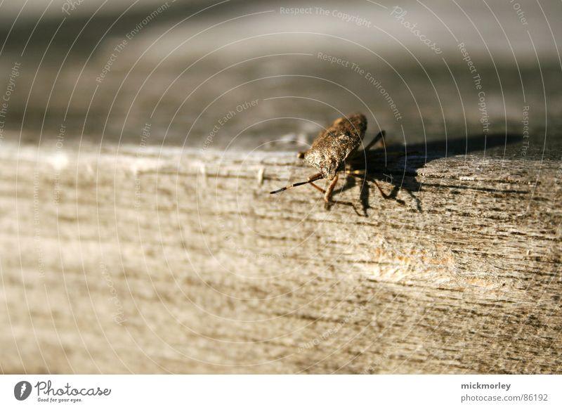 holzkäfer Natur rot Holz braun Insekt Käfer Tarnung Holztisch