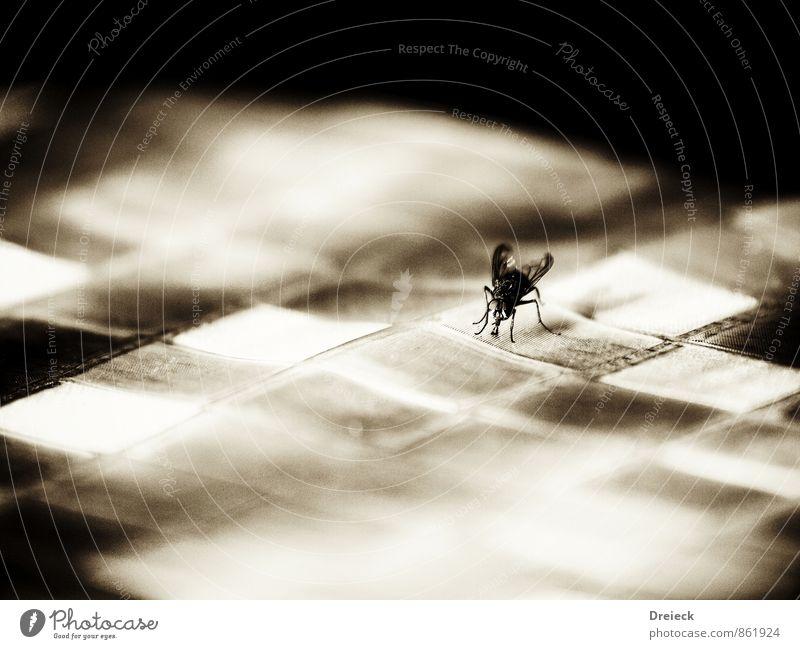 Fliege, Karo Flügel 1 Tier schwarz weiß Insekt Schwarzweißfoto Innenaufnahme Makroaufnahme Muster Licht Schatten Schwache Tiefenschärfe