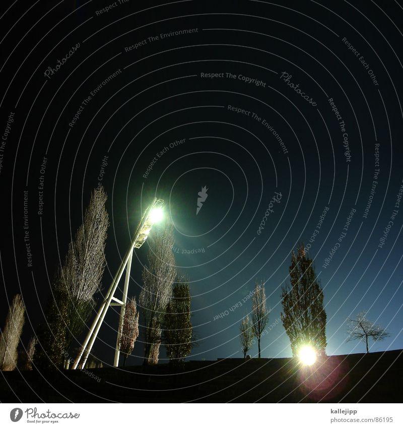 ostkurve Natur Pflanze hell Beleuchtung Ecke Kurve Glühbirne Botanik Neonlicht Scheinwerfer Fan Stadion Fußballplatz Fußballer Sportverein Trainer
