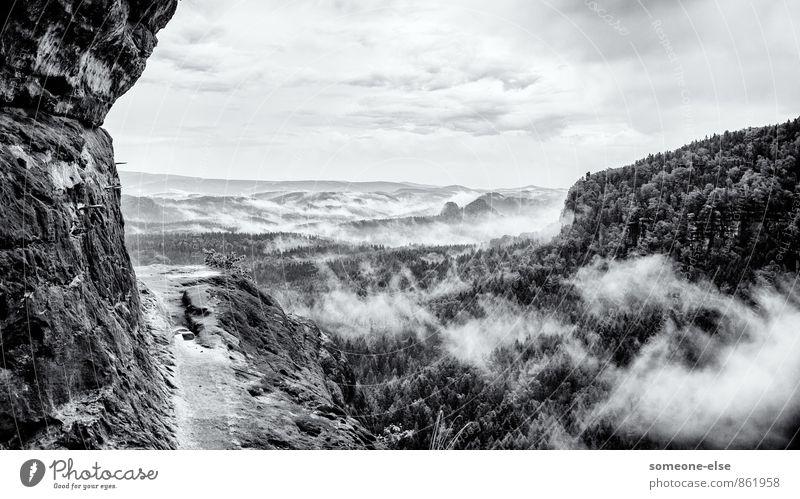 Es kommt Nebel auf. Natur Landschaft Wetter schlechtes Wetter Gewitter Wald Hügel Felsen Berge u. Gebirge Sächsische Schweiz Tal beobachten ästhetisch