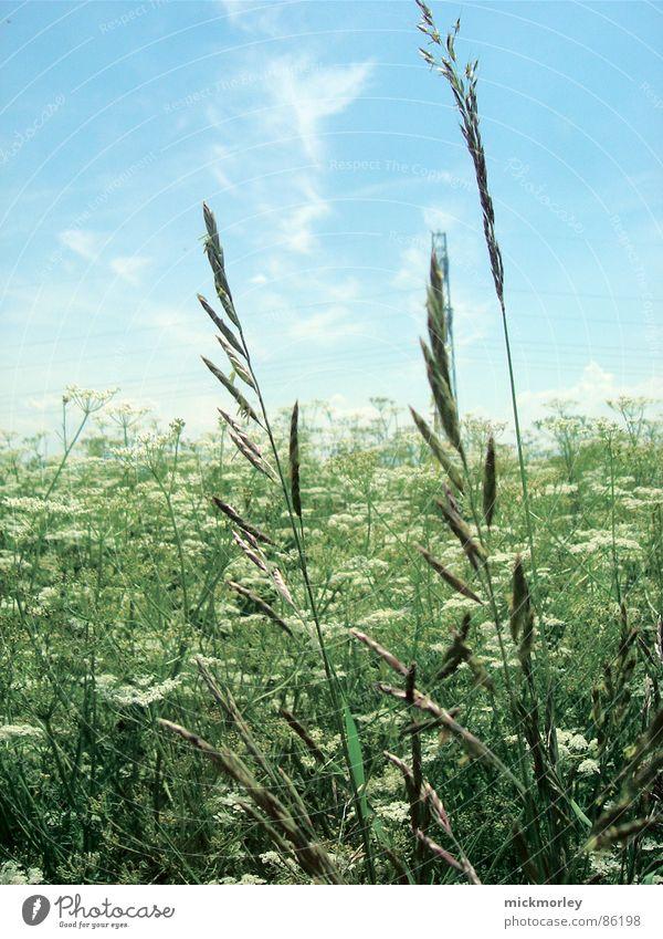 die wiese und die halme Blume Blumenwiese Wiese Halm Frühling Sommer Elektrizität grün frisch knackig Leben Luft Himmel Natur