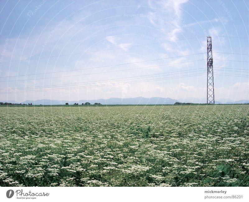 blumenwiese Blume Blumenwiese Wiese Halm Frühling Sommer Elektrizität grün frisch knackig Leben Luft Himmel Natur