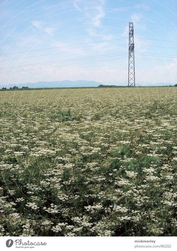 blumenwiese Natur Himmel Blume grün Sommer Leben Wiese Frühling Luft frisch Elektrizität Halm Blumenwiese knackig