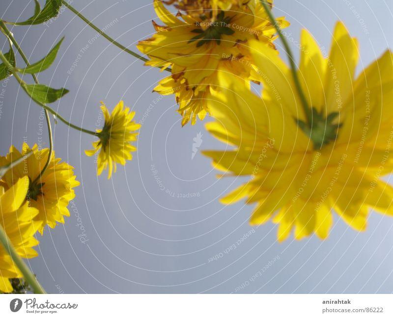 Sonnenseite Himmel Blume Sommer Freude gelb Garten Freiheit Landschaft Schönes Wetter himmelblau Frühlingsgefühle gefiedert hell-blau