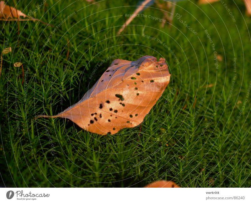 im moosbett Natur grün Blatt Umwelt dünn Stengel Loch welk Wildnis Naturphänomene beseitigen Naturgesetz