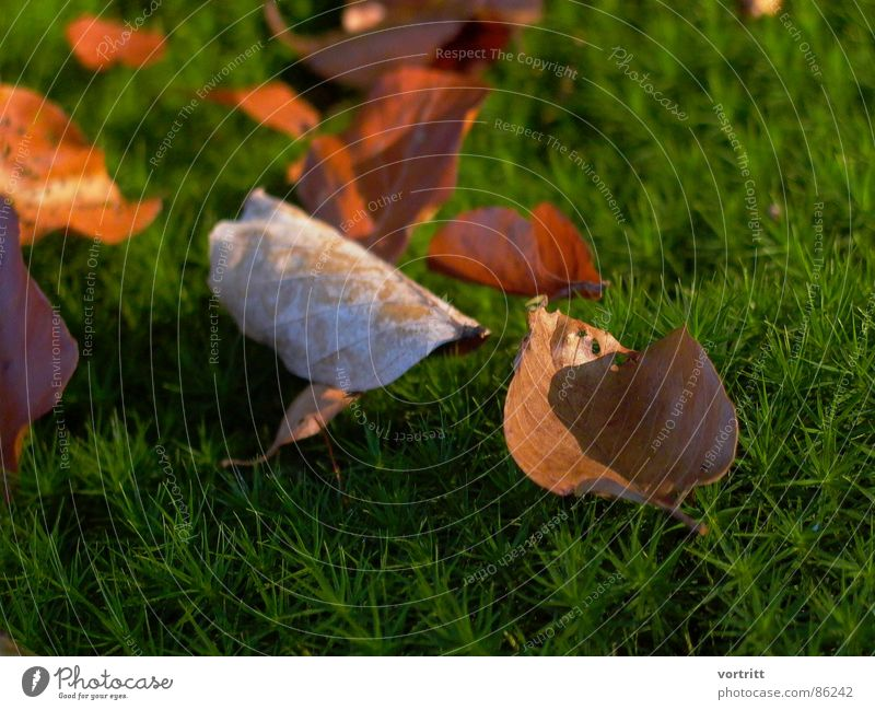 das letzte aufblühen Natur grün Blatt Herbst Frühling Umwelt Bett dünn Blühend Präsentation Wildnis Lichteinfall Naturphänomene Naturgesetz