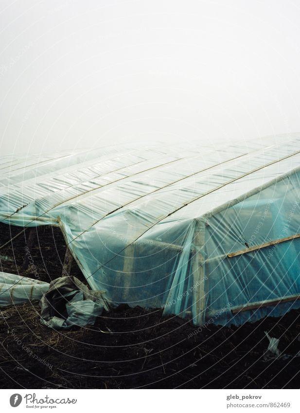 China Stadt Natur Pflanze Urelemente Erde Klima Stimmung Vertrauen Wahrheit chaotisch exotisch Fortschritt Freiheit Hoffnung Horizont Landhandel Agrarprodukt