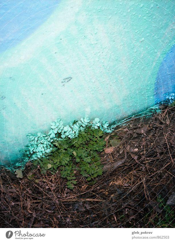 Bemaltes Gras Pflanze Blume Gebäude Mauer Wand Zeichen Ornament Graffiti Stimmung Wahrheit Farbfoto Außenaufnahme abstrakt Muster Strukturen & Formen