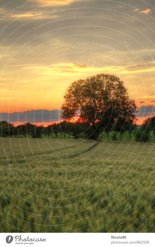 Sonnenuntergang im Feld Landschaft Sonnenaufgang Sommer Herbst Baum Einsamkeit Abenddämmerung HDR Farbfoto Außenaufnahme Menschenleer Textfreiraum links