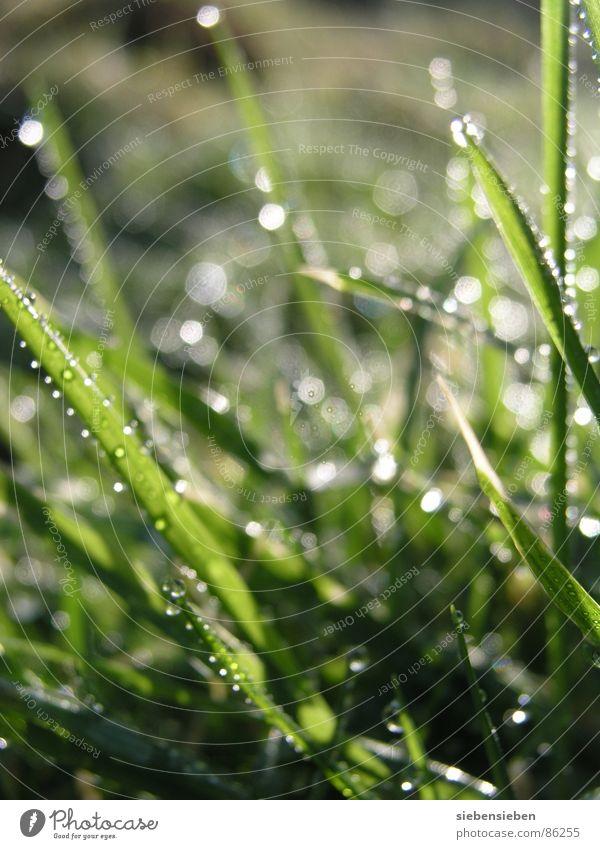 Guten Morgen Beleuchtung schön Wiese Gras Halm grün Wassertropfen feucht nass frisch saftig Lichteinfall Naturphänomene Sonnenaufgang hell glänzend prächtig
