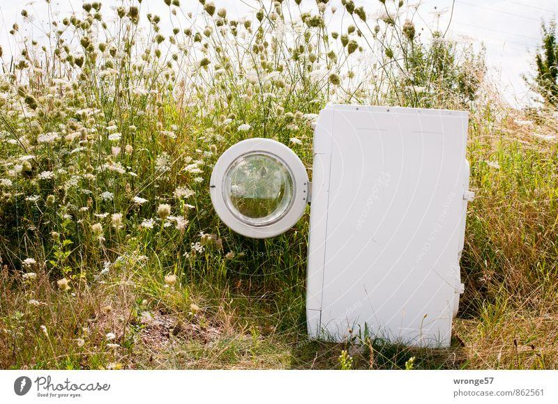 Ökowaschgang Waschmaschine Vollwaschautomat Umwelt Pflanze Sommer Straßenrand entdecken alt eckig grün weiß Müll Müllentsorgung ungesetzlich entsorgen Farbfoto
