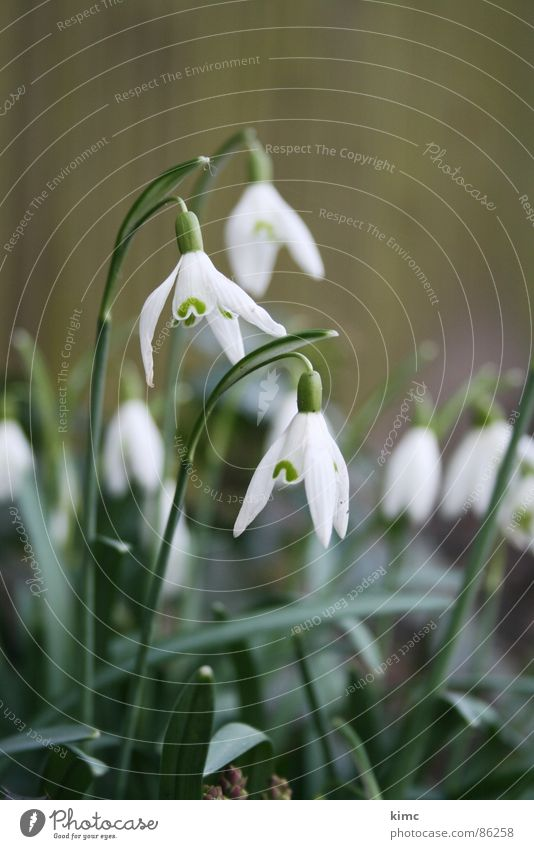 maiglöckchen grün Pflanze Frühling Garten Blühend Mai Wildpflanze