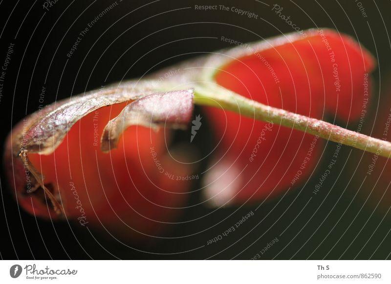 Blatt Natur Pflanze schön Sommer ruhig Herbst Frühling elegant Idylle authentisch ästhetisch einfach Blühend einzigartig Gelassenheit