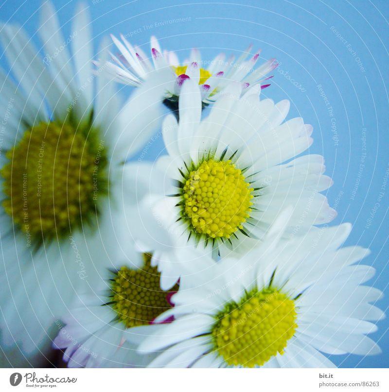 JUNGSBLÜMCHEN Sommer Natur Pflanze Frühling Blume Grünpflanze Wiese Blumenstrauß Duft frisch Kitsch blau Glück Lebensfreude Frühlingsgefühle Romantik