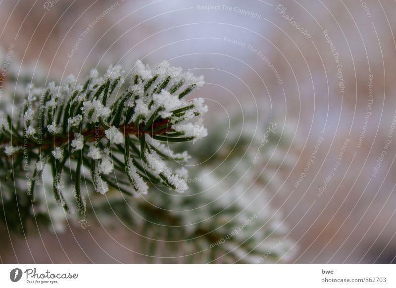Schneebedeckter Zweig Leben Winter Winterurlaub wandern Natur kalt grün Ast Tanne besinnlich Weihnachtsbaum eis Eiskristall gefroren Hintergrundbild tannenbaum