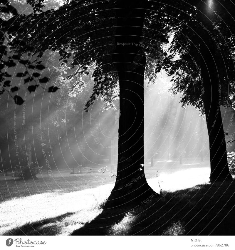Durchbruch weiß Sommer Baum schwarz Gefühle Kraft leuchten frisch Hoffnung Glaube Optimismus