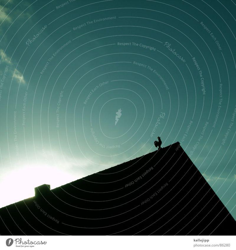 mein lieber herr gesangsverein III Hahn Dorf Bildung Flöte Amsel Fink Bomber Bombenangriff Flugtier Vogel Dach Fenster Tier Lehrer Gezwitscher singen Drossel