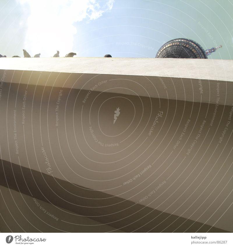 mein lieber herr gesangsverein IV Aussichtsturm Tourist Taube Feder Kunst Alexanderplatz Antenne Fahrstuhl Funkturm Wahrzeichen Vogeljagd Mitte Himmel Federvieh