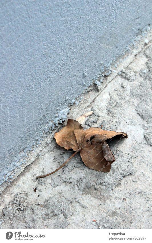 Herbst Umwelt Natur Wetter Pflanze Blatt Straße alt kaputt natürlich trocken blau braun grau ruhig Traurigkeit Einsamkeit Ende kalt Zerstörung