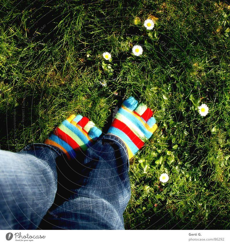Frühlingsfüße - Part l Strümpfe Ringelsocken gestreift mehrfarbig Gänseblümchen gelb Gras Wiese Zehen Jeanshose gehen Frühlingsgefühle Freude zehensocken