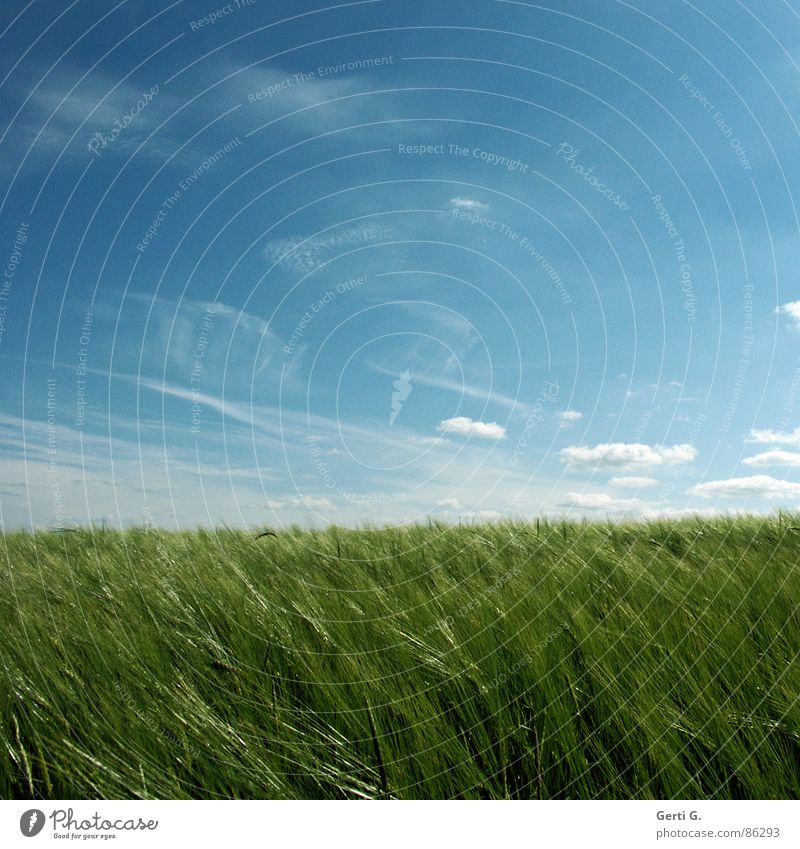 nochmal, weil's so schön war Himmel grün Sommer Feld glänzend Wind verrückt frisch Quadrat Landwirtschaft Ernte Ackerbau Kornfeld saftig Weizen