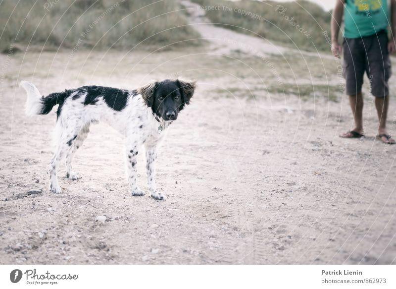 Strandhund Hund Natur Erholung Landschaft Tier Ferne Umwelt Freiheit Zufriedenheit Kraft Ausflug Kreativität Schönes Wetter Abenteuer Urelemente