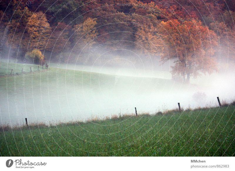 > Natur Landschaft Erde Luft Wasser Herbst Wetter Nebel Baum Wiese Feld Wald träumen braun mehrfarbig grün kalt Umwelt Zaun Zaunpfahl Gras Hügel wandern