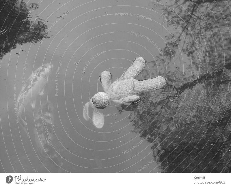 Sleep by the fishes Wasser Tod Fisch obskur Stofftiere Karpfen Stoffhase