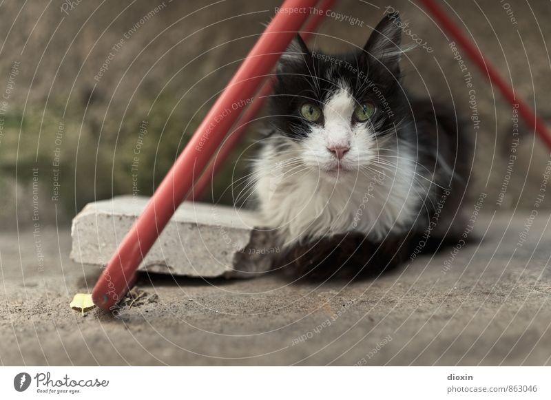 Fussel Tier Haustier Katze Tiergesicht Fell 1 Wäscheständer liegen Blick kuschlig niedlich Herumtreiben Farbfoto Außenaufnahme Menschenleer Textfreiraum links