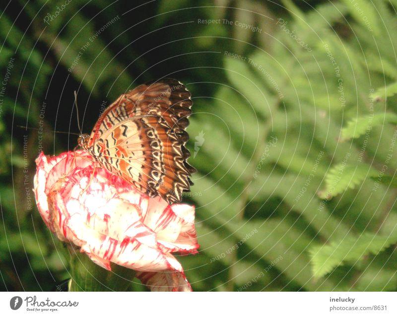 Schmetterling / Butterfly Pflanze Blume Blüte planen Rüssel Elefant