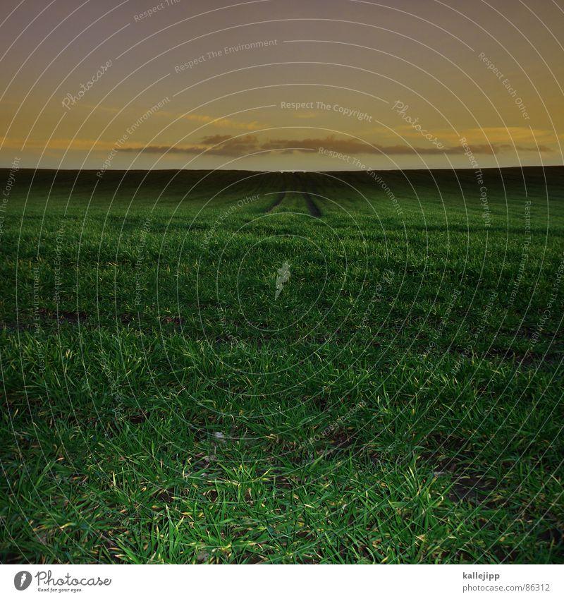 jürgen drews Erdspalte Traktorspur Weizen Feld grün Gras Kornfeld Landwirtschaft Ackerbau zentral Zentralperspektive Mitte Horizont Strukturen & Formen Halm