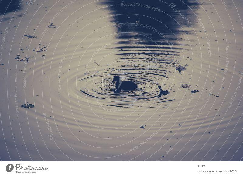 Das kleine hässliche Entlein Schwimmen & Baden Natur Tier Wasser Teich See Wildtier Vogel 1 Tierjunges authentisch dunkel natürlich niedlich wild Gefühle Trauer