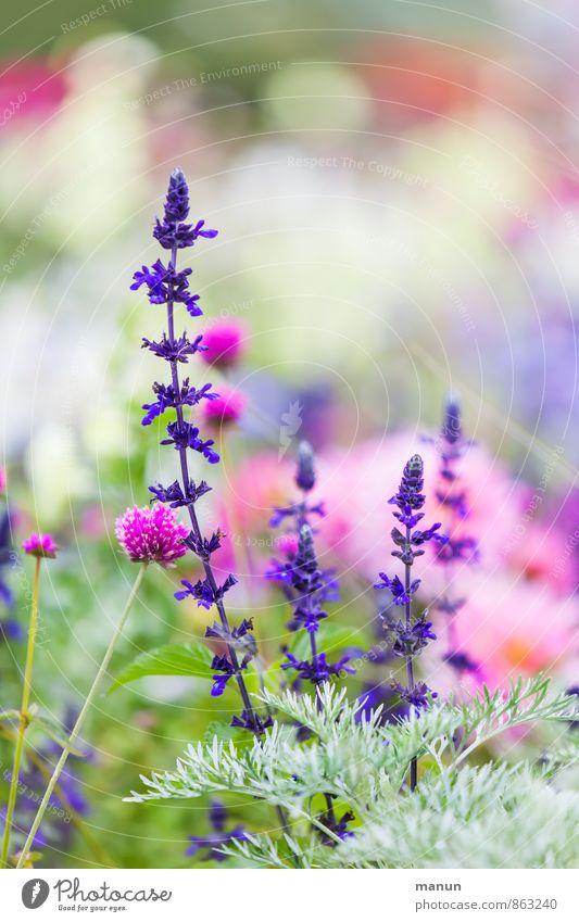 Gartenschau Natur Pflanze Sommer Blume Sträucher Blüte Wildpflanze Park grün violett rosa Farbfoto Außenaufnahme Menschenleer Textfreiraum oben