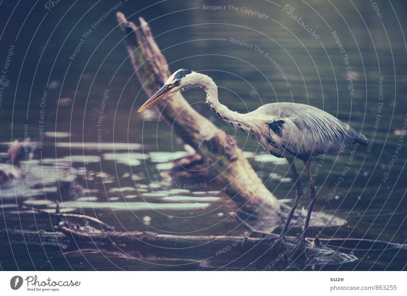 Das Futter im Visier Natur blau Wasser Landschaft Tier Umwelt grau See Vogel elegant wild Wildtier stehen warten ästhetisch Feder